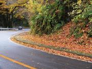 Leaves by roadside, Lake Towada, Akita-ken., Japan, photo