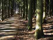 Path through trees, Lake Tanuki, Shizuoka-ken, Japan, photo
