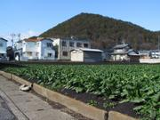 """Inaka"" (suburban countryside), Kotozuka, Gifu, Japan, photo"