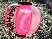 Plum lantern, Ano plum grove, Nishi-Yoshino-mura, Nara-ken, Japan, photo