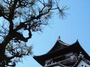 Tower and pine, Inuyama Castle, Aichi-ken, Japan, photo