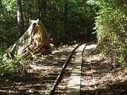 Truck tracks, Trail to Jomon cedar, Yakushima, Kagoshima-ken, Japan, photo