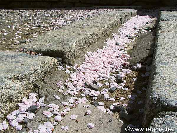 Cherry blossoms on steps, Matsuyama Castle, Ehime-ken, Japan, photo