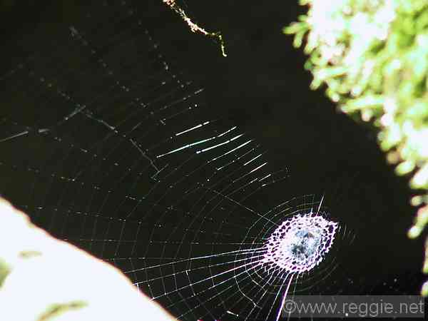 Spider\'s web, Shoyo Gardens, Nikko, Tochigi-ken, Japan, photo