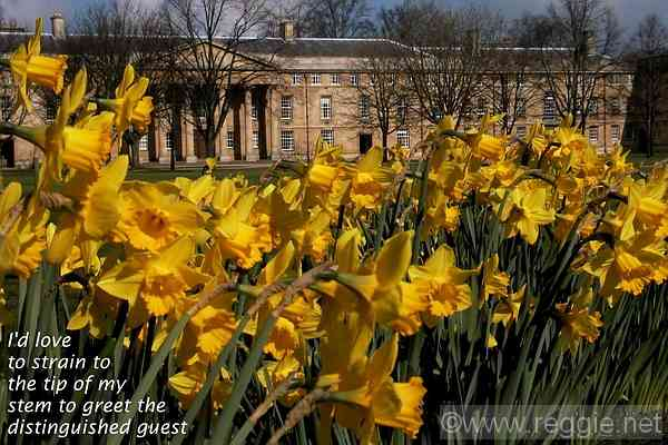 Downing College, Cambridge, England, photo