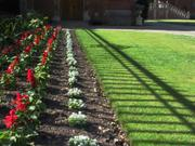 Flowers by fence, Selwyn College, Cambridge, England, photo