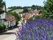 Flowers and street, Kersey, Suffolk, England, photo
