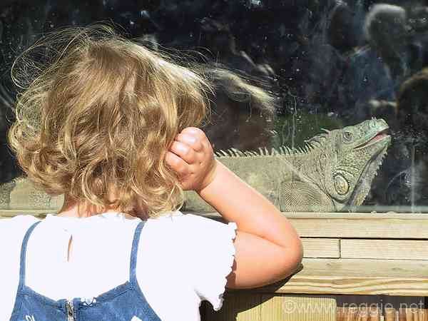 Girl watching iguana, Longleat house, Wiltshire, England, photo