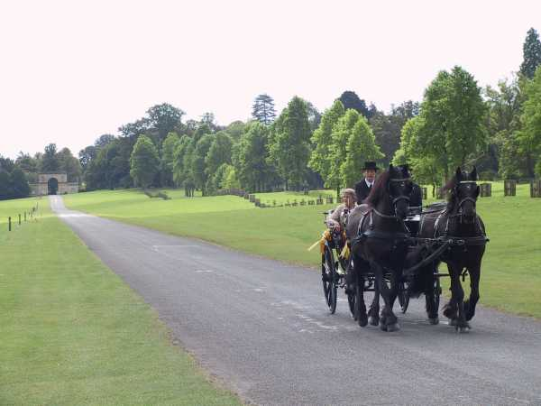 Pony and trap on Longleat driveway, photo