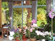 View from kitchen sink, Parents\' garden, Lisburn, N. Ireland, photo