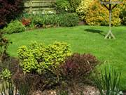Lawn and borders, Parents\' garden, Lisburn, N. Ireland, photo
