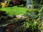 Pond and lawns, Parents\' garden, Lisburn, N. Ireland, photo
