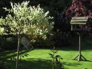 Bush and bird table, Parents\' garden, Lisburn, N. Ireland, photo