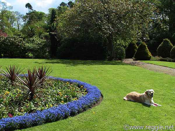 Walled garden and Retriever, Sir Thomas and Lady Dixon Park, Lisburn, Co. Antrim, N. Ireland, photo