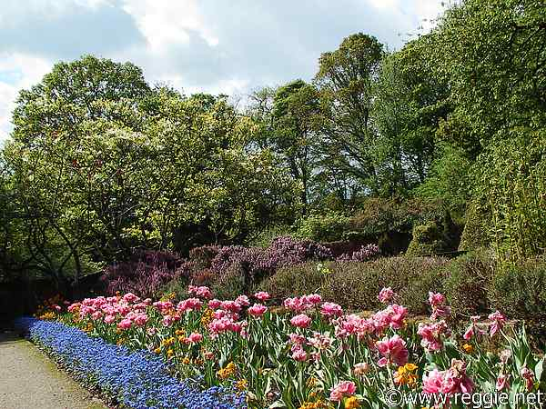 Tulip borders, Sir Thomas and Lady Dixon Park, Lisburn, Co. Antrim, N. Irelandの写真