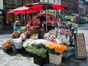 Flower stall, O\'Connell Street, Dublin, Ireland, photo
