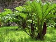 Giant Rhubarbs, Kylemore Abbey Victorian gardens, Co. Galway, Ireland, photo