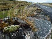 Stone wall by road, near Lough Inagh, Connemara, Co. Galway, Ireland, photo