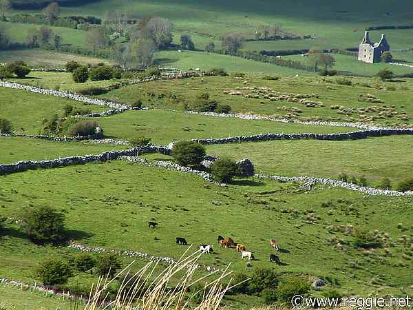 Dry stone walled fields, Carrowkeel, Co. Sligo, Ireland, photo