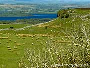 Lough Arrow and fields, Carrowkeel, Co. Sligo, Irelandの写真