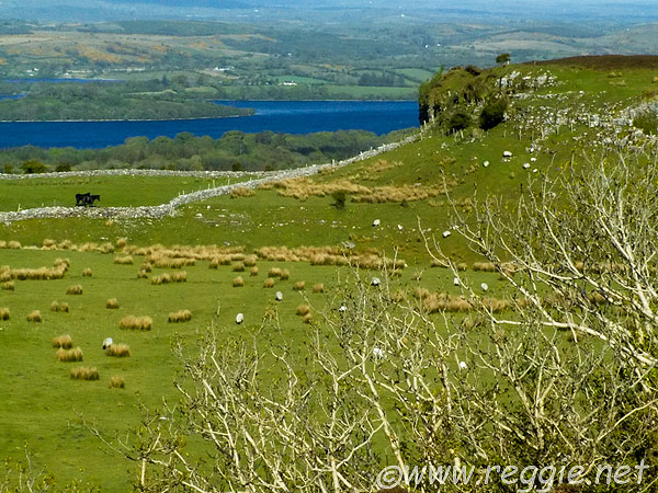 Lough Arrow and fields, Carrowkeel, Co. Sligo, Ireland, photo