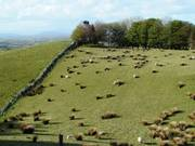 Sheep grazing, Carrowkeel, Co. Sligo, Irelandの写真
