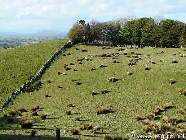 Sheep grazing, Carrowkeel, Co. Sligo, Ireland, photo