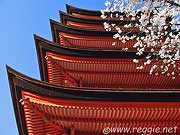 Cherry Blossoms and Five-storied Pagoda, Miyajima, Hiroshima-ken, Japan, photo