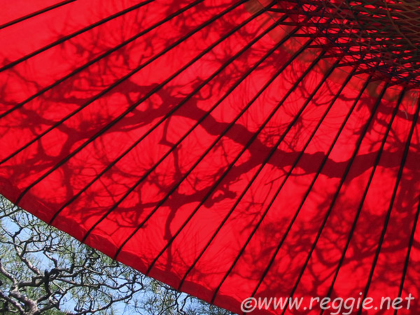 Red umbrella and pine shadow, Arashiyama, Kyoto, Japan, photo