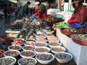Shellfish vendor, Jagalchi market, Busan, Korea, photo