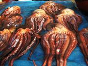 Octopus, Jagalchi market, Busan, Korea, photo